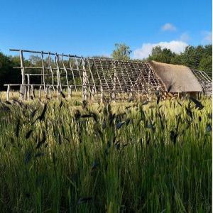 Se nourrir de ses champs : premières agricultures néolithiques en Seine-Saint-Denis et Val-de-Marne - Conférence virtuelle