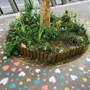 Se (re)connecter aux arbres en ville - Conférence virtuelle