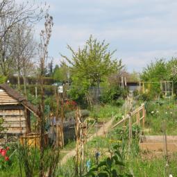 Les jardins collectifs du 18e arrondissement - Conférence virtuelle