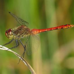 Observation des libellules et autres insectes au Bois de Vincennes