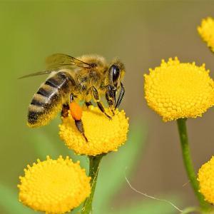 Tégéval - A la découverte du monde des abeilles ©Pexels