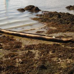 Fabrication d'une pirogue - Archéosite de la Haute-Île
