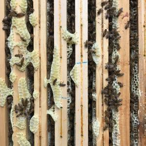 Découverte de l'apiculture aux Ruches de La Villette