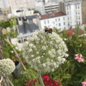 Paris, ville nouricière ? - Conférence virtuelle