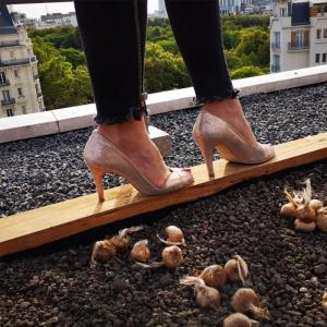 Du safran sur le toit de l'opéra Bastille - Atelier pédagogique