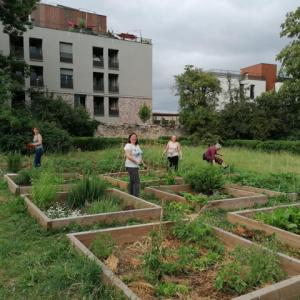 Cultives sous ton toit !  Conférence virtuelle