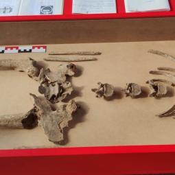 Tomber sur un os : l'anthropologie funéraire - archéosite de la Haute-Île