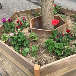 Végétalisation participative dans le 20ème arrondissement