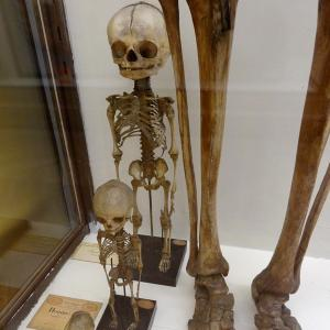 Museum of monsters : the oldest curiosity cabinet in Paris