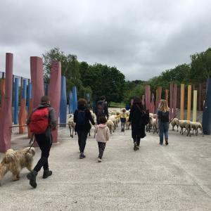 Pâturage en parcours dans le Parc Georges Valbon