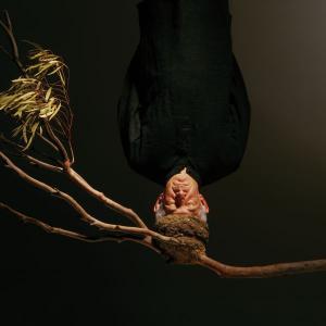 Visite guidée de l'exposition en présence de l'artiste Hossein Valamanesh