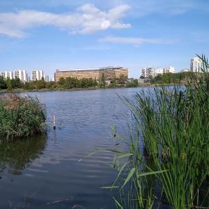 Découverte des oiseaux du lac de Créteil